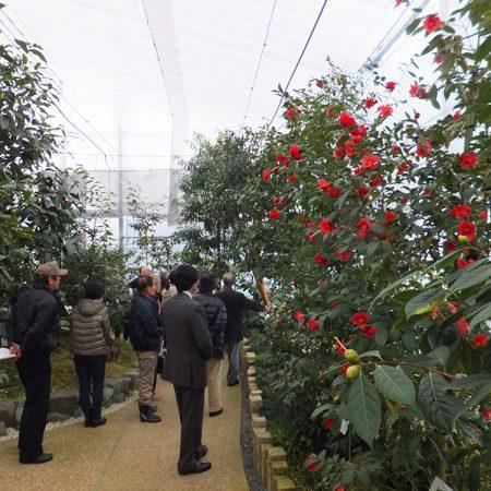 Inokuchi Camellia Center